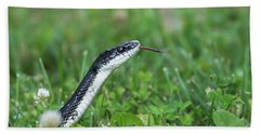 Beach Towel featuring the photograph White Bellied Black Snake by Andrea Silies