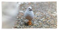 White Bird Sneaking Through Beach Towel