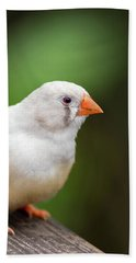 Beach Towel featuring the photograph White Bird Standing On Deck by Raphael Lopez