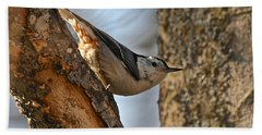 White Breasted Nuthatch 370 Beach Sheet