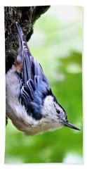 White Breasted Nuthatch Beach Sheet