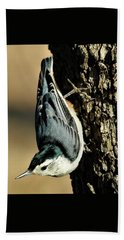 White-breasted Nuthatch On Tree Beach Sheet by Sheila Brown