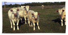Beach Towel featuring the photograph White Cows by Sally Weigand
