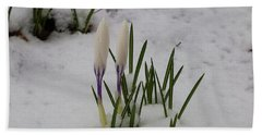 White Crocus In Snow Beach Towel