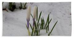 White Crocus In Snow Beach Sheet