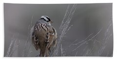 White-crowned Sparrow Beach Sheet