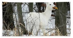 White Doe With Squash Beach Towel by Brook Burling