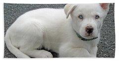 White Dog Blue Eyes Beach Towel