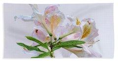 White Exbury Azalea Blooms Beach Towel by Louise Kumpf