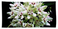 White Flowers Of Paleaku Gardens Beach Towel
