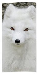 White Fox Beach Sheet by Athena Mckinzie