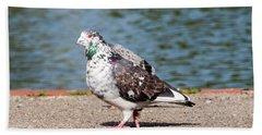 White-gray Pigeon Beach Sheet