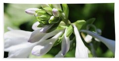 White Hosta Bloom Beach Sheet by Mary Haber