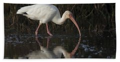 White Ibis Feeding In Morning Light Beach Sheet