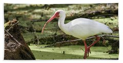 White Ibis Beach Towel by Gary Wightman