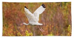 White Ibis In Hilton Head Island Beach Towel