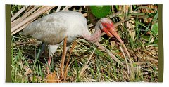 White Ibis With Crayfish Beach Towel