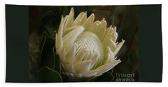 Beach Sheet featuring the photograph White King Protea By Kaye Menner by Kaye Menner
