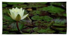 Beach Sheet featuring the photograph White Lily In The Pond by Amee Cave