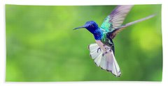 White Necked Jacobin Hummingbird Beach Sheet
