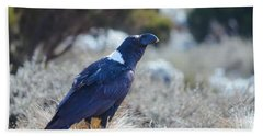 Beach Towel featuring the photograph White-necked Raven Camping Out On Kilimanjaro by Jeff at JSJ Photography