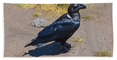 Beach Towel featuring the photograph White-necked Raven Of Kilimanjaro by Jeff at JSJ Photography