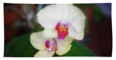 White Orchids Phalaenopsis Beach Towel