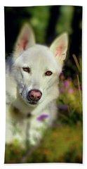 White Shepherd Dog Posing In The Sunlight Beach Sheet