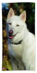 White Shepherd In The Sunlight Beach Sheet by Tyra OBryant