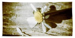 White Summer Daisy Denuded Of Its Petals Beach Towel