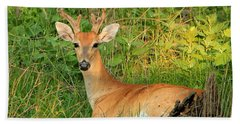 White-tail Buck Resting Beach Sheet
