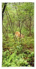 Beach Sheet featuring the photograph White-tailed Deer In A Misty, Pennsylvania Forest by A Gurmankin