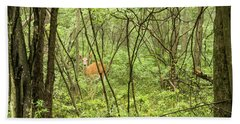 Beach Towel featuring the photograph White-tailed Deer In A Pennsylvania Forest by A Gurmankin