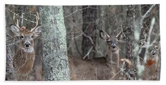 White Tailed Deer Smithtown New York Beach Towel