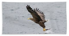 Beach Towel featuring the photograph White-tailed Eagle Catching Dinner by Karen Van Der Zijden