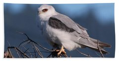 White Tailed Kite Taking A Break From The Hunt Beach Towel