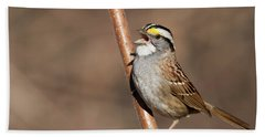Beach Sheet featuring the photograph White-throated Sparrow by Mircea Costina Photography