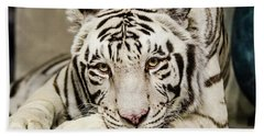 White Tiger Looking At You Beach Sheet