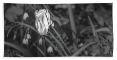 Beach Towel featuring the photograph White Tulip June 2016 Bw.  by Leif Sohlman