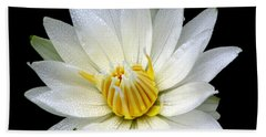 Beach Towel featuring the photograph White Waterlily With Dewdrops by Rose Santuci-Sofranko