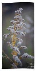 White Weeds In Winter, Oak Grove Park, Grapevine, Texas Beach Sheet