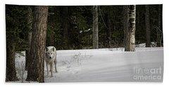 White Wolf Beach Sheet by Brad Allen Fine Art