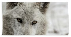 Beach Towel featuring the photograph White Wolf II by Brad Allen Fine Art