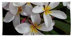 White/yellow Plumerias In Bloom Beach Towel