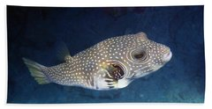 Whitespotted Pufferfish Closeup Beach Towel