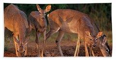 Whitetail Deer At Waterhole Texas Beach Sheet
