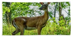 Beach Sheet featuring the photograph Whitetail Deer  by Thomas R Fletcher