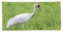 Whooping Crane 2017-3 Beach Towel by Thomas Young