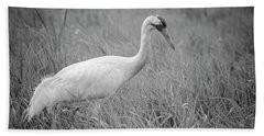 Whooping Crane 2017-4 Beach Towel by Thomas Young