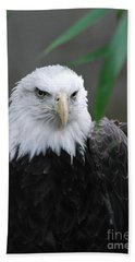 Wild Bald Eagle Bird Beach Towel
